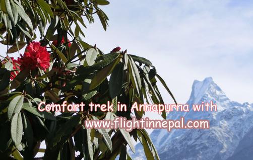 Annapurna Comfort Trek